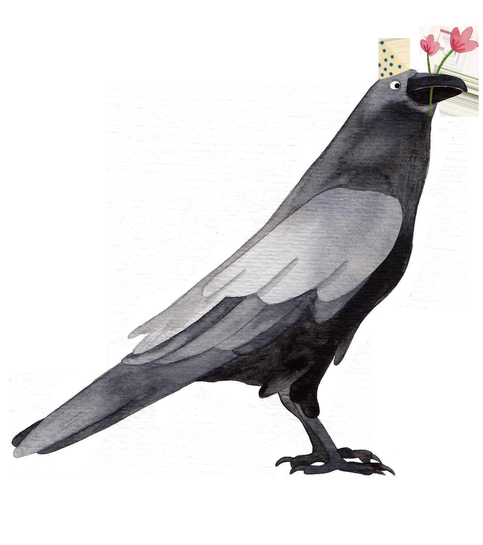 crow reading